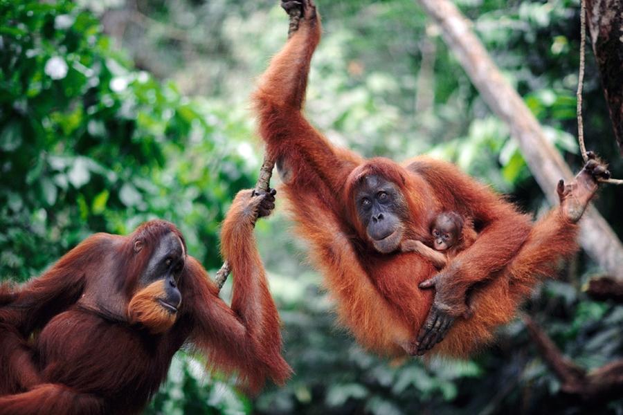 3D2N Bukit Lawang & Orangutans